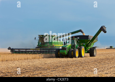 Soybean harvest on the Froese farm near Winkler, Manitoba, Canada. - Stock Photo