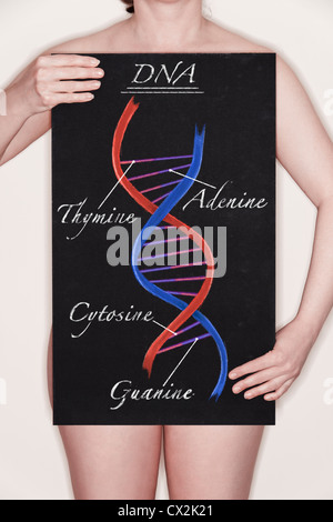 Diagram / illustration of a DNA strand Double Helix drawn on a blackboard in chalk. Concept image - Stock Photo