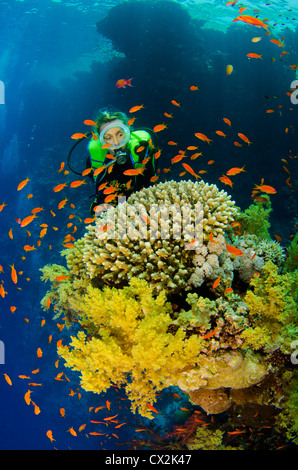 Red Sea, underwater, coral reef, sea life, marine life, ocean, scuba diving, vacation, water, diver, female diver, - Stock Photo