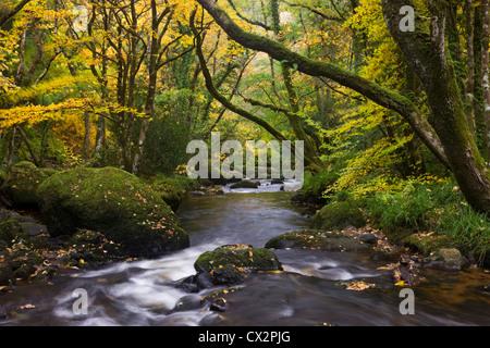 River Teign flowing through deciduous woodland, Dartmoor, Devon, England. Autumn (October) 2010. - Stock Photo