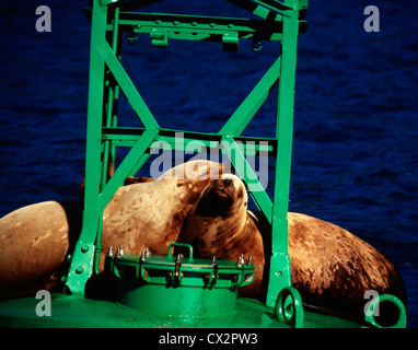 Two sleeping sea lions on a buoy in Prince William Sound, Alaska - Stock Photo