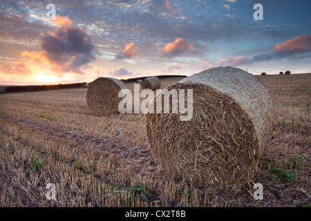Bales in a harvested corn field at sunset, Devon, England. Summer (September) 2012. - Stock Photo