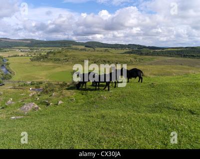 dh Kilmartin Glen DUNADD ARGYLL Black sheep Dunadd Hillfort Crag fort Dalriada