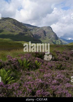 dh Three Sisters GLEN COE ARGYLL Purple Heather Glen Coe mountains Beinn Fhada Gearr Aonach Aonach Dubh glencoe Scotland scottish highlands landscape