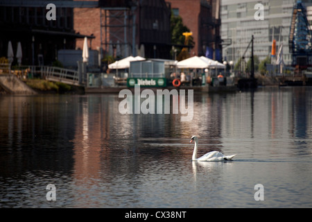 swan at Inner Harbour Duisburg, North Rhine-Westphalia, Germany, Europe - Stock Photo