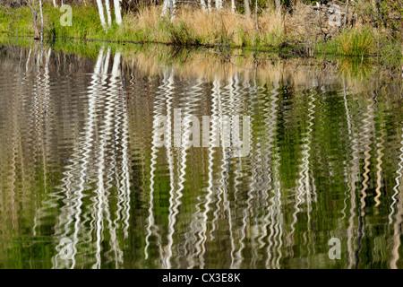 tree reflections in beaver pond, Greater Sudbury, Ontario, Canada - Stock Photo