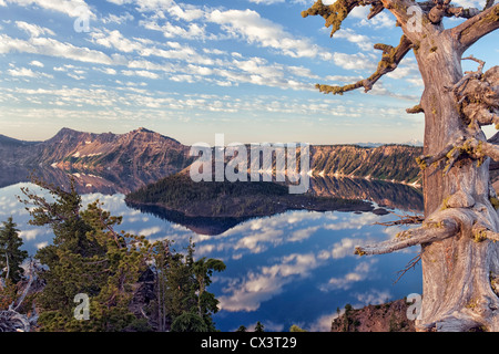 Weathered white pine tree points to first light on Wizard Island and the rim of Oregon's Crater Lake National Park. - Stock Photo
