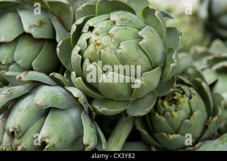 Fresh artichokes for sale at the Monterey Farmers Market. - Stock Photo