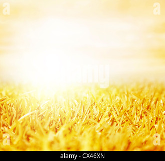 Picture of beautiful golden wheat field with bright sun shine, abstract autumn natural background, agriculture landscape - Stock Photo