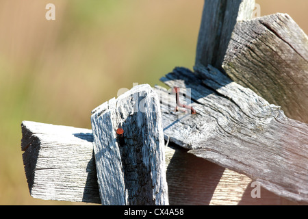 Some rusty old nails sticking out of some old wooden boards. - Stock Photo