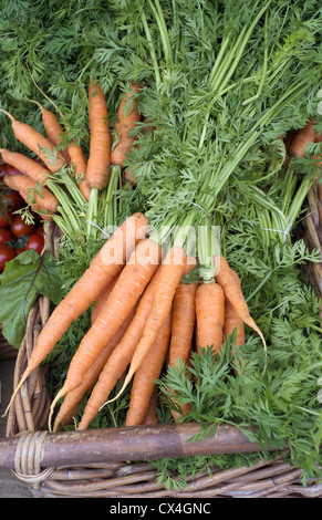 Bunch of fresh Carrots with green tops - Stock Photo
