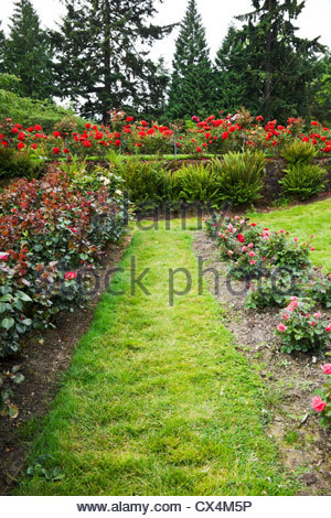 International Rose Test Garden, Portland, Oregon, USA Stock Photo ...