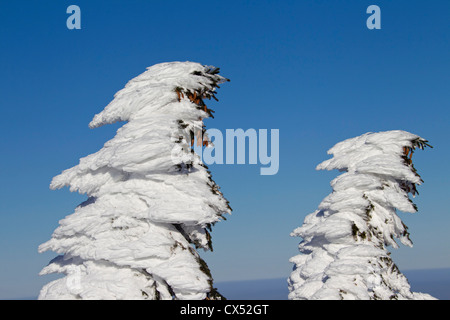 Frozen snow covered spruce tree after snowstorm in winter at Brocken, Blocksberg in the Harz National Park, Germany - Stock Photo