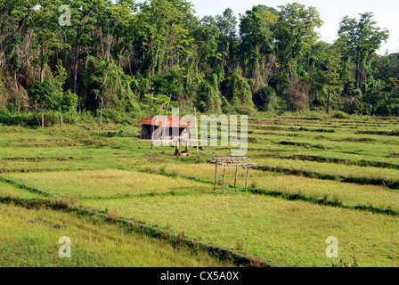 Small Hut Homes of Tribal farmer in the Middle of Rice Paddy field.Scene from Wayanad Forest village at Kerala India - Stock Photo