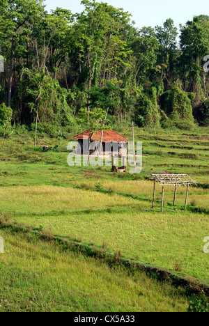 Tribal huts of Farmers in the Middle of Rice Fields in Wayanad Villages nearby the Forest Area Landscape at kerala,India - Stock Photo