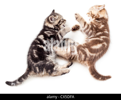 two kittens playing together - Stock Photo