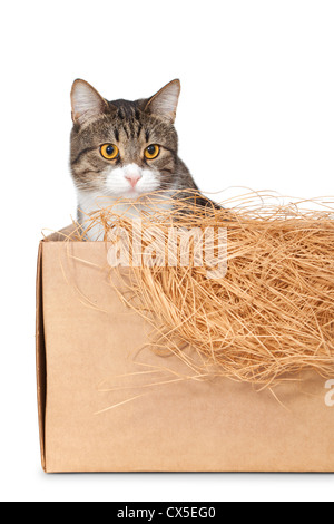 Cat in a cardboard box isolated on white background - Stock Photo