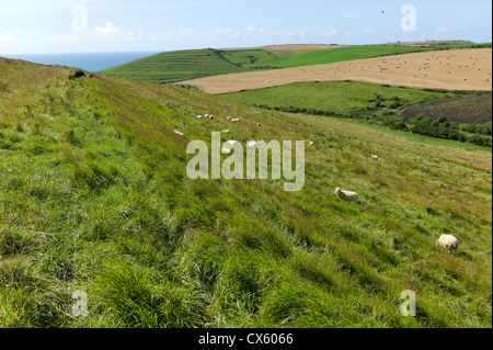 Coastal footpath through fields at Worth Matravers, Dorset, England, UK - Stock Photo