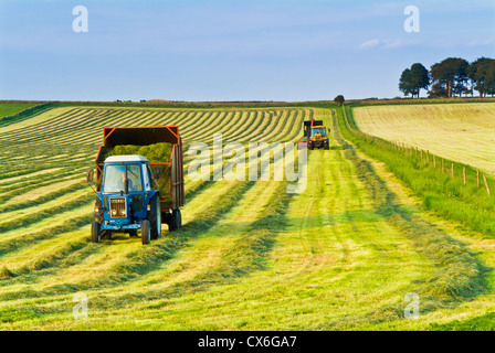 Stripes in field produced by harvesting grass near Parsley Hay Derbyshire Peak District England UK - Stock Photo