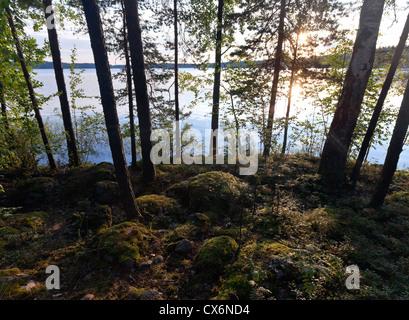 Rising sun is shining In the morning coastal forest, Saimaa lake, Karelia, Finland - Stock Photo
