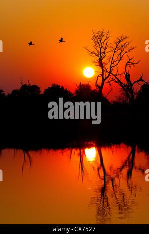 Deep orange African sunset over the Okavango delta, Botswana - Stock Photo