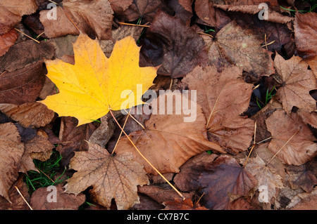 Italy, Lombardy, Park in Autumn, Yellow Leaves - Stock Photo