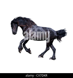 Black friesian stallion gallop isolated on white - Stock Photo
