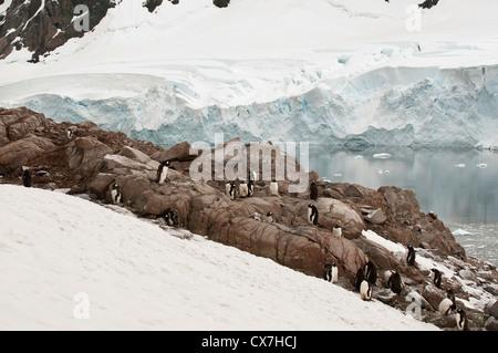 Penguins On The Ice Along The Coastline; Antarctica - Stock Photo