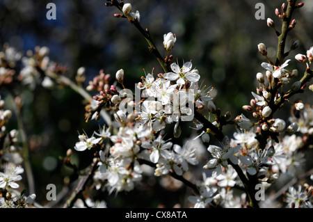 download Устойчивость растений к тяжелым металлам [отв. ред. Н.Н. Немова] 2007