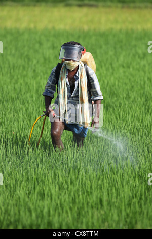 Indian farmer spraying pesticide Andhra Pradesh South India - Stock Photo