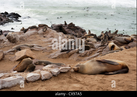 Hundreds of fur seals cavorting on the beach at Cape Cross, Namibia on the Skeleton Coast - Stock Photo