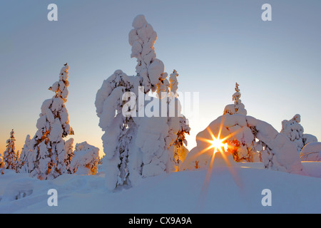 Snow covered trees at sunset in Yllas, Finland. - Stock Photo