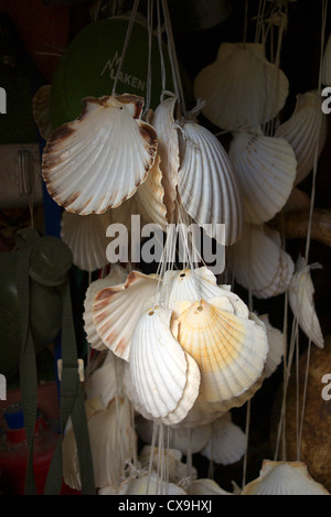 Scallop shells on sale along the Camino de Santiago route in Spain. - Stock Photo