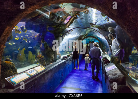 People In Underwater Viewing Tunnel Looking At Sharks And