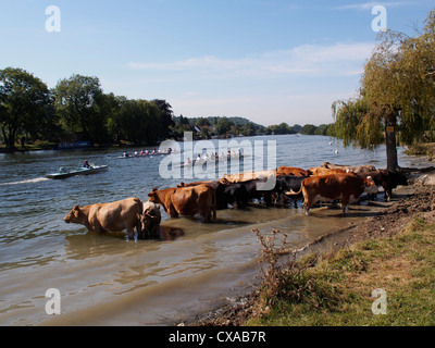 Rowers on the River Thames Bourne End and Marlow Buckinghamshire - Stock Photo