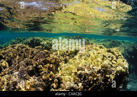 Coral reef at the surface of the ocean in Honduras. - Stock Photo