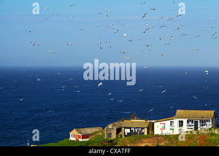 Lizard Point, The Lizard, Cornwall, England, United Kingdom, Europe - Stock Photo