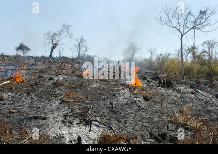A burnt hill side after deforestation beside road from Pathein to Mawdin Sun, Irrawaddy Delta, Myanmar (Burma), - Stock Photo