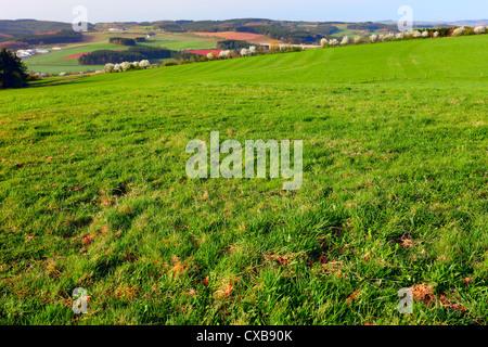 Agriculture landscape in early morning sun, near Prüm, Rheinland-Pfalz, Germany. - Stock Photo