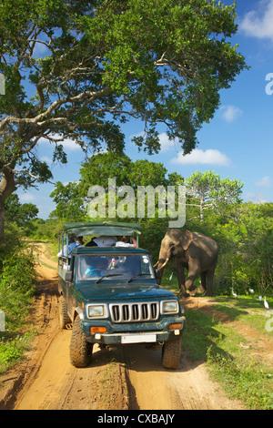 Asiatic tusker elephant (Elephas maximus maximus), close to tourists in jeep, Yala National Park, Sri Lanka, Asia - Stock Photo