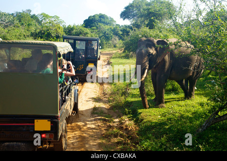 Asiatic tusker elephant (Elephas maximus maximus), close to tourists in jeep, Yala National Park, Sri Lanka, Asia - Stock Photo