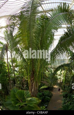 Palm House interior, Royal Botanic Gardens, Kew, UNESCO World Heritage Site, London, England, United Kingdom, Europe - Stock Photo