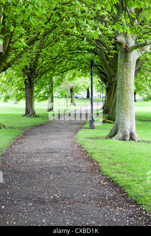 Spring trees on The Stray in spring, Harrogate, North Yorkshire, Yorkshire, England, United Kingdom, Europe - Stock Photo