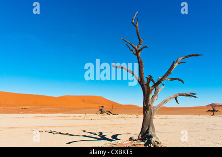 Sossusvlei, Namib Desert, Namib Naukluft Park, Namibia, Africa - Stock Photo