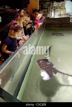 Families and children looking at the fish in the Sea Life London Aquarium, South Bank, London UK - Stock Photo