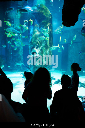 People looking at the fish in  the Sea Life London Aquarium, South bank, London UK - Stock Photo