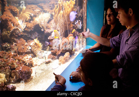 Teenagers looking at the fish, the London Aquarium, South Bank, London UK - Stock Photo