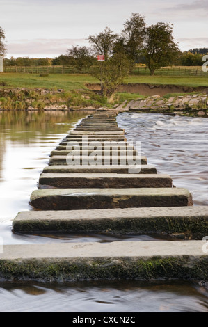 Low viewpoint close-up of calm water flowing round stepping stones crossing scenic river - River Wharfe, Burley - Stock Photo