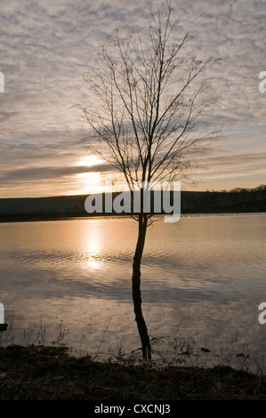 Small bare tree standing & reflected in water, silhouetted at sunset against dramatic golden sky - scenic Swinsty - Stock Photo