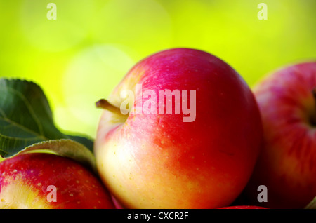 ripe red apples on table - Stock Photo